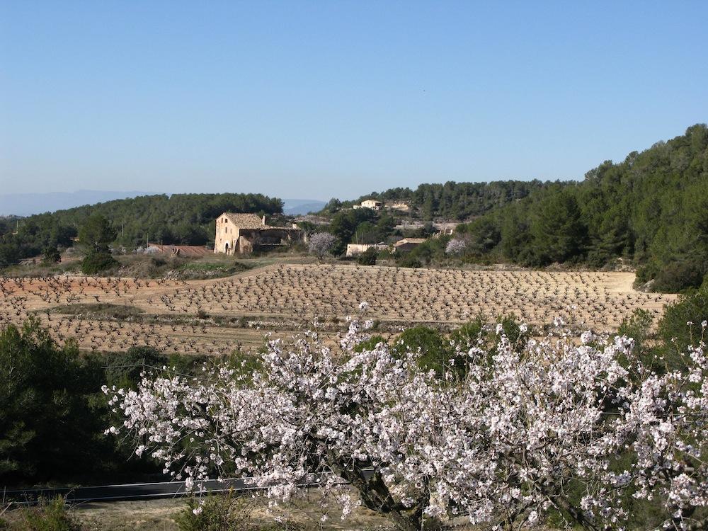 rural-property