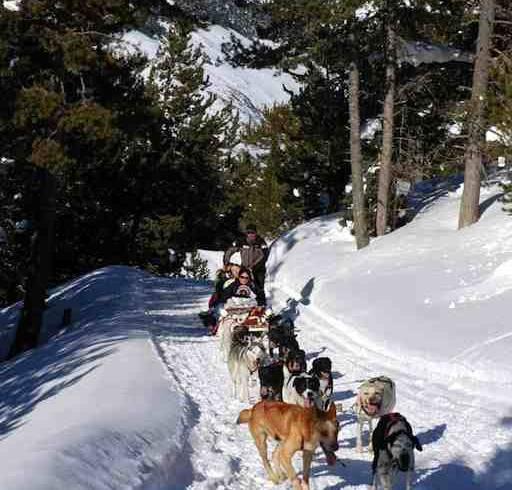 pyrenees-baqueira-dogs