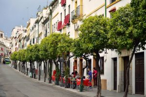 Lined lined street in Cordoba